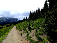 Mount Rainier June 2015